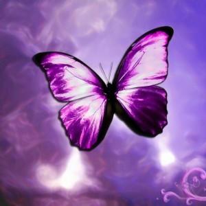 But-butterflies-7911918-300-300[1]